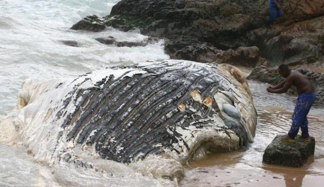 As causas da morte do animal ainda são desconhecidas - Foto: Lucio Tavora | Ag. A TARDE