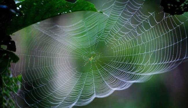 As aranhas têm de 1,8 a 2,10 milímetros - Foto: Narendra Shrestha   Arquivo   Agência EFE