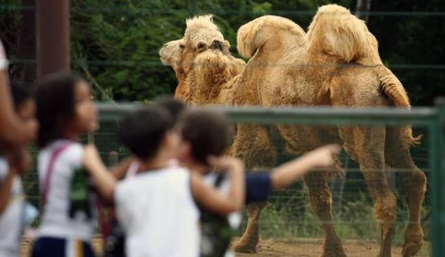 Além dos animais, adultos e crianças terão um atrativo a mais para ir ao zoo neste final de semana - Foto: Raul Spinassé | Ag. A TARDE