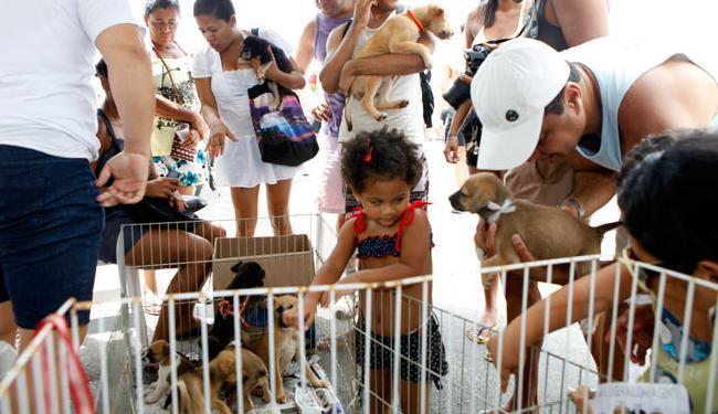 Feiras de adoção de animais buscam dar um lar aos filhotes e adultos - Foto: Marco Aurélio Martins | Ag. A TARDE
