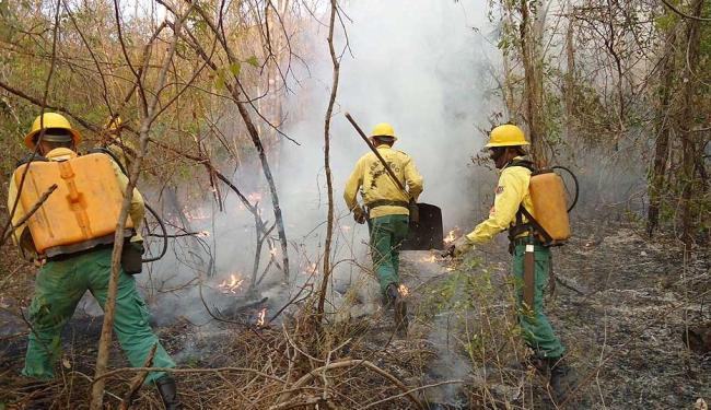 Brigadistas lutam contra os focos de incêndio florestal na Serra do Mimo - Foto: Miriam Hermes   Ag. A TARDE