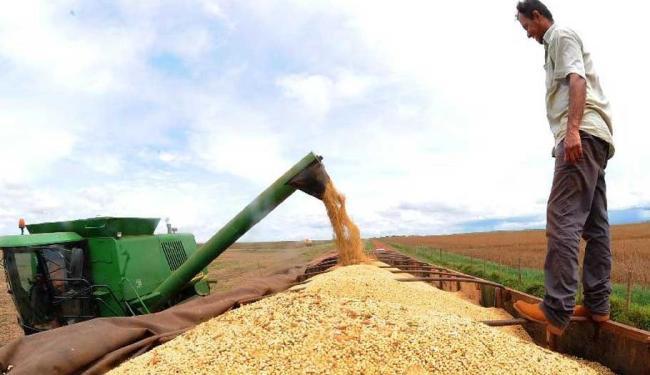 O Brasil deve tomar a liderança dos EUA como principal produtor mundial de soja - Foto: Agência Brasil