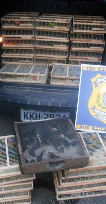 Algumas aves já estavam mortas devido às condições de armazenamento - Foto: Divulgação | PRF