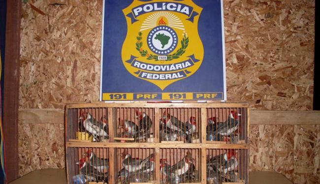 Mais de 40 animais eram transportados em gaiolas - Foto: Divulgação   PRF