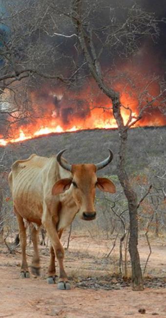 Estiagem em municípios da região favorece a propagação de incêndios e destruição da fauna e flora - Foto: Alércio Brandão | Estadão