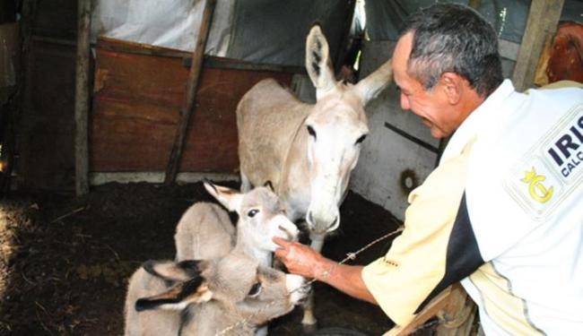 Filhotes foram batizados como Calunga e Boneco - Foto: Reprodução   Blog do Anderson