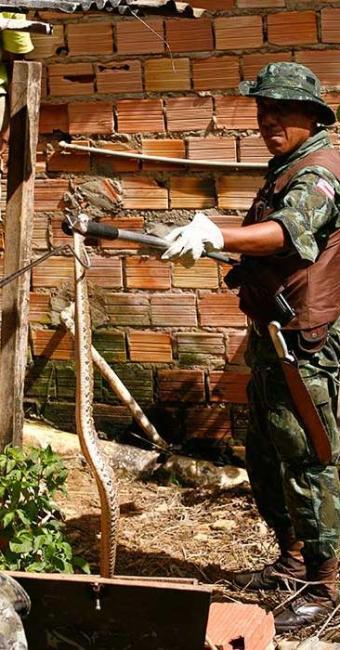 Militares da COPPA retiram cobra de residência no Bairro da Paz - Foto: Xando Pereira | Ag. A TARDE