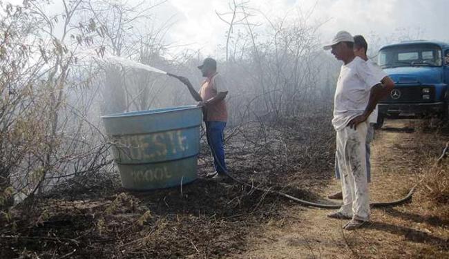 Fogo já consumiu cerca de 50 árvores, inclusive jaqueira sagrada - Foto: Alzira Costa | Divulgação