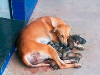 Cadela e filhotes passam bem - Foto: Reprodução | TV Bahia