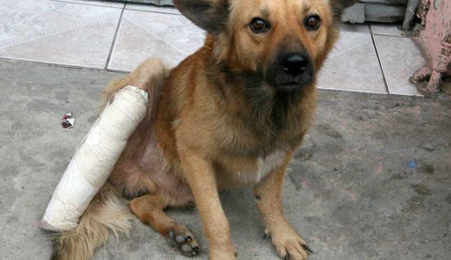 Com a cirurgia, Amarelinho poderá voltar a andar normalmente - Foto: Maíra Azevedo  Ag. A TARDE