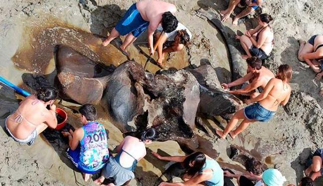Fóssil foi datado com carbono 14 entre 1,8 e 1,9 mil anos - Foto: Unesp / Divulgação