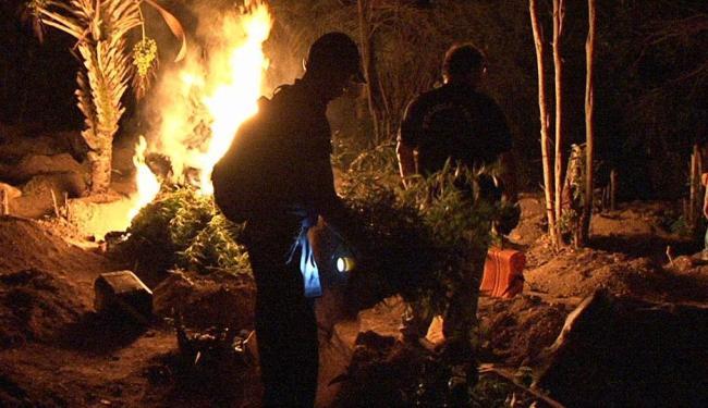 Droga foi descoberta em ação envolvendo agentes de três municípios na região - Foto: Polícia Civil | Divulgação