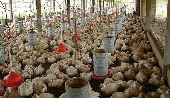 Resíduos de granjas podem se transformar em biogás e gerar energia - Foto: Divulgação | Seagri