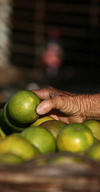Frutas como as laranjas são ricas em vitamina C - Foto: Raul Spinassé | Ag. A TARDE