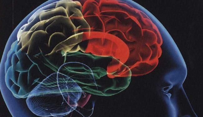 A transparência ajudará no estudo do cérebro - Foto: Reprodução