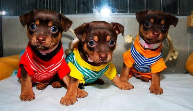 Compra de animais somente será permitida em canis credenciados - Foto: Divulgação