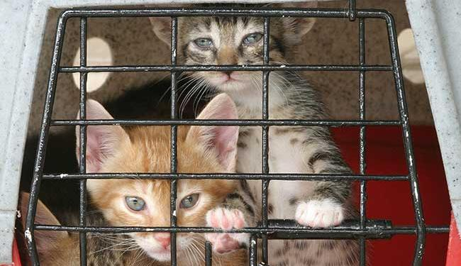 Segundo o projeto, animais domésticos só poderão ser vendidos em locais como canis e gatis - Foto: Eduardo Martins   Ag. A TARDE