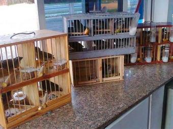 Aves eram transportadas de forma irregular em ônibus - Foto: Divulgação | PRF