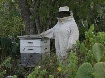Pesticidas provocam morte ou paralisia de abelhas - Foto: Agência A TARDE