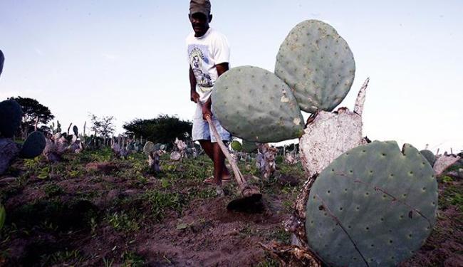 A chuva animou os produtores de Anguera - Foto: Luiz Tito   Ag. A TARDE