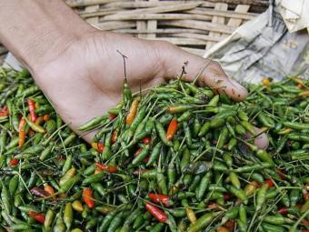 Substância contida na pimenta ajuda a eliminar células cancerígenas - Foto: Iracema Chequer   Ag. A TARDE