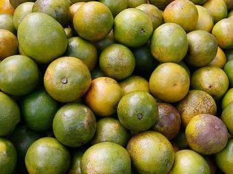 Frutas cítricas como a laranja ajudam a fortalecer sistema imunológico - Foto: Gildo Lima | Ag. A TARDE