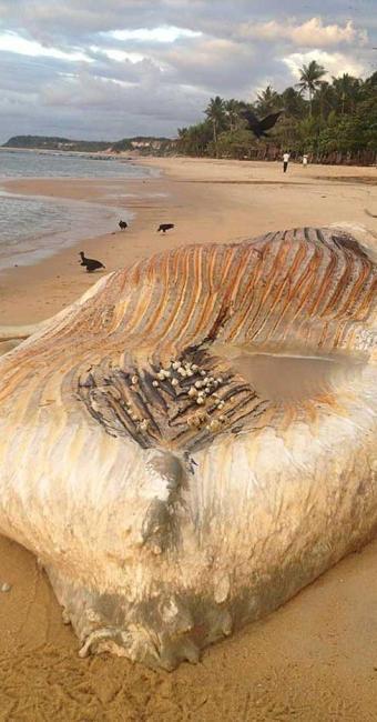 Animal foi encontrado na Praia do Espelho - Foto: Divulgação | Namidia Comunicação