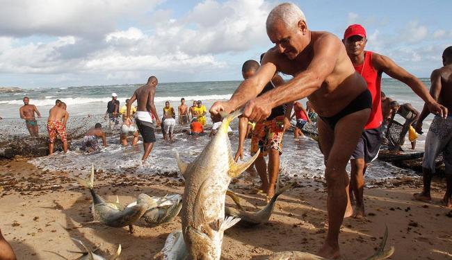 Peixe é retirado do mar e jogado na areia de Itapuã - Foto: Lúcio Távora   Ag. A TARDE