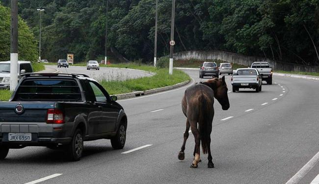 Cavalo atravessa a rua e motoristas são obrigados a desviar - Foto: Joá Souza | Ag. A TARDE