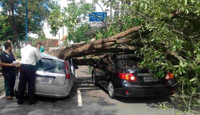 Árvore está bloqueando o trânsito, que está lento no local - Foto: Edilson Lima | Ag. A TARDE