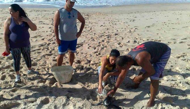 Potyra tenta manter o animal hidratado - Foto: Edilson Lima   Ag. A TARDE