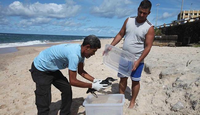 Animal foi resgatado quase 4 horas após ser encontrado - Foto: Edilson Lima | Ag. A TARDE