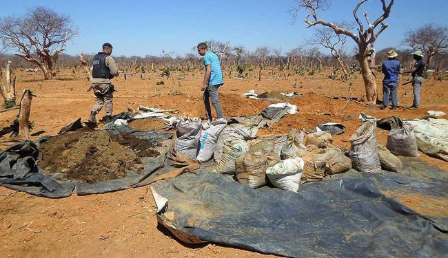 Polícia encontrou cova com cerca de 1,5 tonelada de maconha pronta para o comércio - Foto: Divulgação | 7º BPM