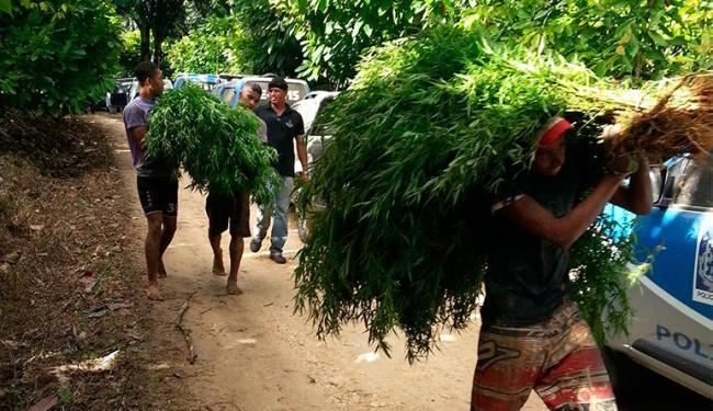 Droga foi apreendida durante operação da Polícia Civil - Foto: Divulgação | Polícia Civil