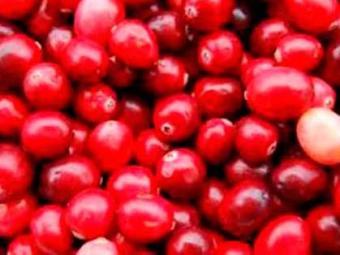 Cranberry tem ação antibacteriana e antioxidante - Foto: Divulgação