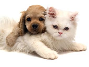 Animais são aceitos nos hotéis listados pelo site TripAdvisor - Foto: Divulgação