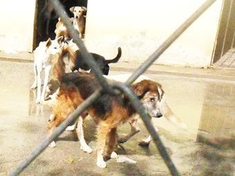 Antes de levar o animal, é preciso fazer um agendamento - Foto: Foto do leitor