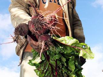 Consumo deve ser diário para aproveitar os benefícios da beterraba - Foto: Néia Rosseto | Ag. A TARDE