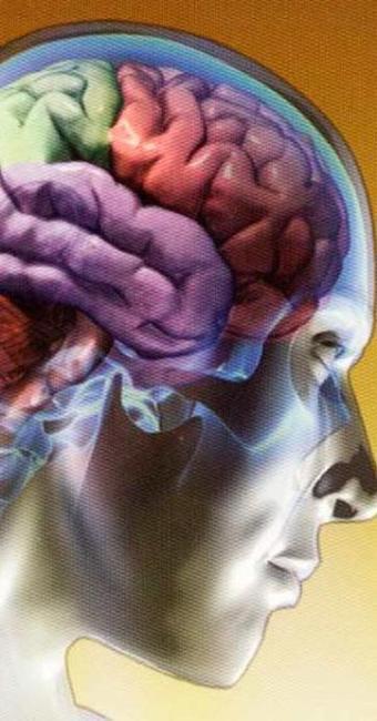 Cobre se acumularia no cérebro, causando danos - Foto: Hype Science   Divulgação