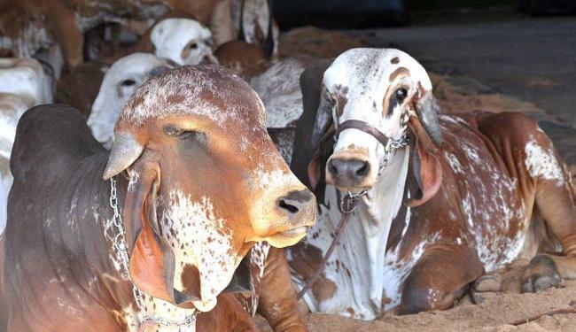 Feira agropecuária vai expor mais de quatro mil animais - Foto: Divulgação