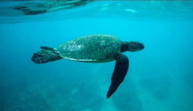 Tartarugas marinhas estão ingerindo cada vez mais detritos e plástico do que há 30 anos - Foto: Agência Reuters