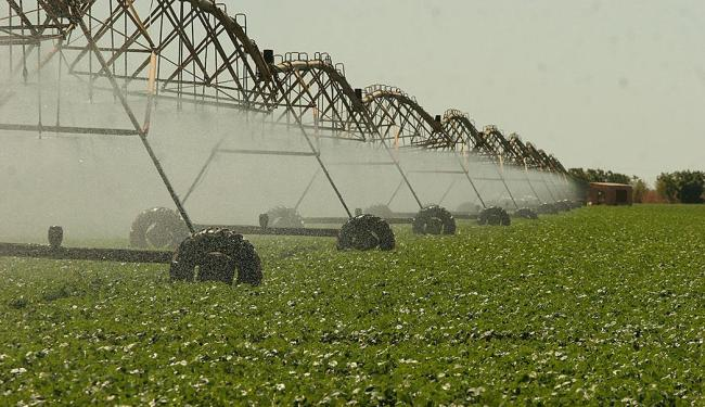 Crédito de R$ 21 bilhões disponibilizado no Plano Safra 2013-2014 deve estimular projetos irrigados - Foto: Luiz Tito | Ag. A TARDE