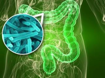 Dieta balanceada ajuda a manter saúde da flora intestinal - Foto: Divulgação