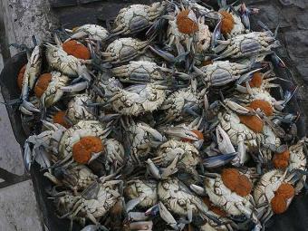 Crustáceos estão entre os alimentos que causam mais alergias - Foto: Agência A TARDE