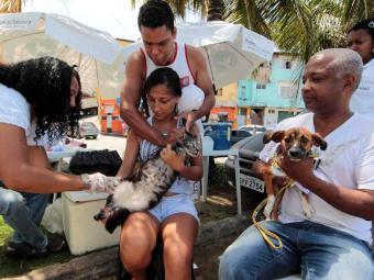 Desde início da campanha, 37 mil animais já foram imunizados em Salvador - Foto: Eduardo Martins | Ag. A Tarde