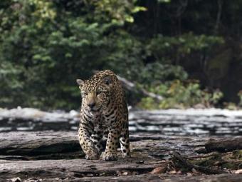 Documentário Amazônia é uma co-produção Brasil - França - Foto: Divulgação