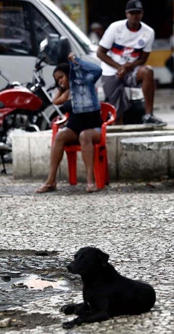 O cãozinho vira-lata preto é mais um a decorar a paisagem na Praça da Igreja Matriz - Foto: Luiz Tito | Ag. A TARDE