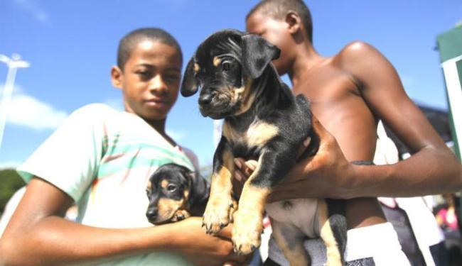 Moradores poderão levar seus cães e gatos para serem imunizados - Foto: Raul Spinassé / Ag. A TARDE