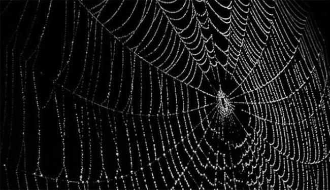 Nova linha é três vezes mais forte do que a teia de aranha sem tratamento - Foto: Divulgação