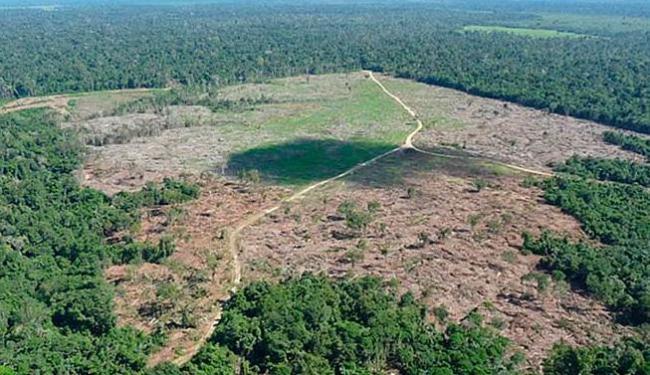 Os primeiros resultados foram a apreensão de 117 mil metros cúbicos de madeira serrada - Foto: Divulgação   Ibama